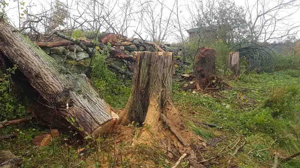 Trädfällning Tjörn