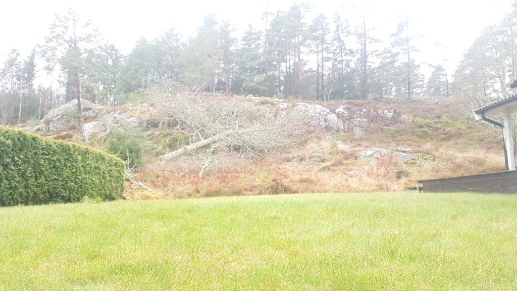 Trädfällning Saltkällan Uddevalla