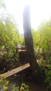 Trädfällning Rotviksbro Uddevalla