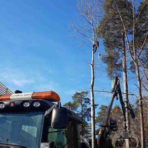 Arborist Huddinge