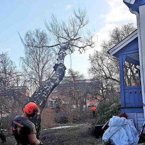 Trädfällning Huddinge