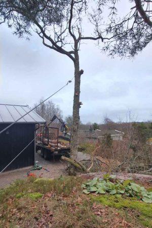 Trädfällning Stenungsund